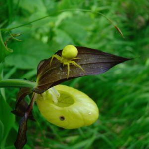 Orchideen-Wanderung